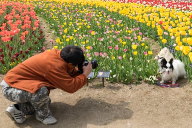 「兵庫県立フラワーセンターで会いましょう」企画【しだれ桜とコラボ♪】-011