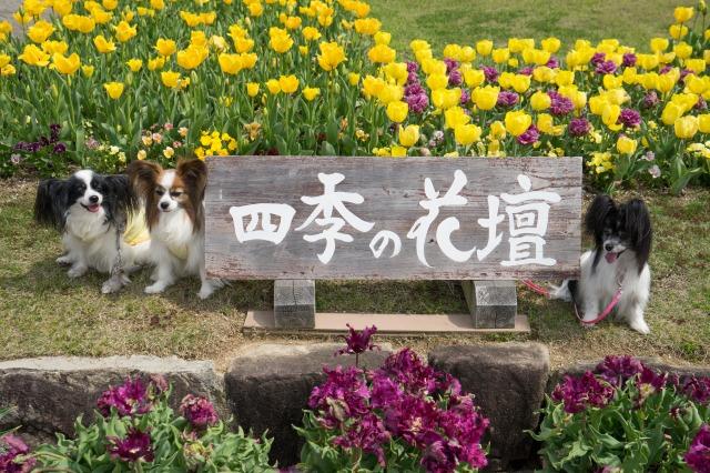 「兵庫県立フラワーセンターで会いましょう」企画【リードでしばかれた!】-001