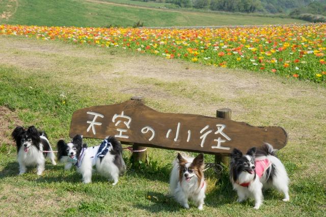 花の島「淡路島」へ♪ ~あわじ花さじき編~-002