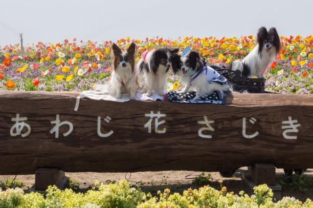 花の島「淡路島」へ♪ ~あわじ花さじき編~-014