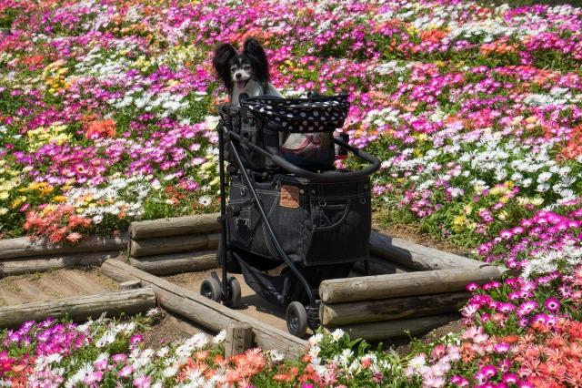花の島「淡路島」へ♪ ~明石海峡公園編~-004