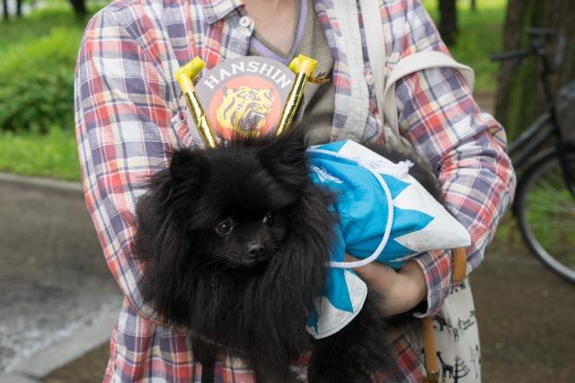 「熊猫犬日記」が大阪にやってきた!【阪神色に染まる真熊くん】-010