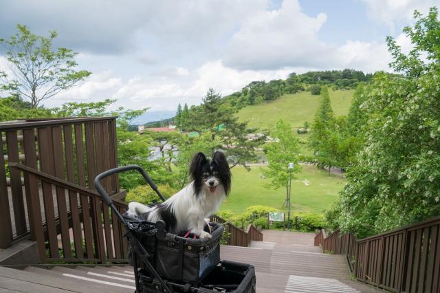 うちの子記念日の前祝いに六甲山へ1-002