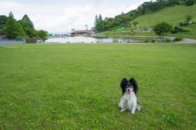 うちの子記念日の前祝いに六甲山へ1-003