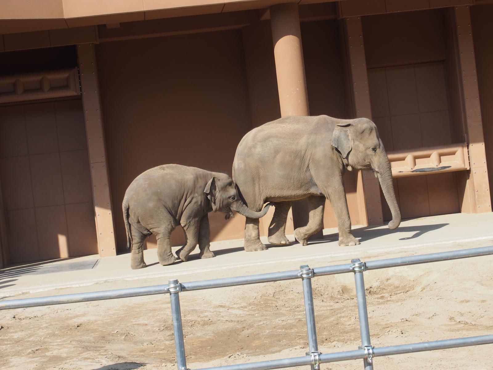 象のおやこ1