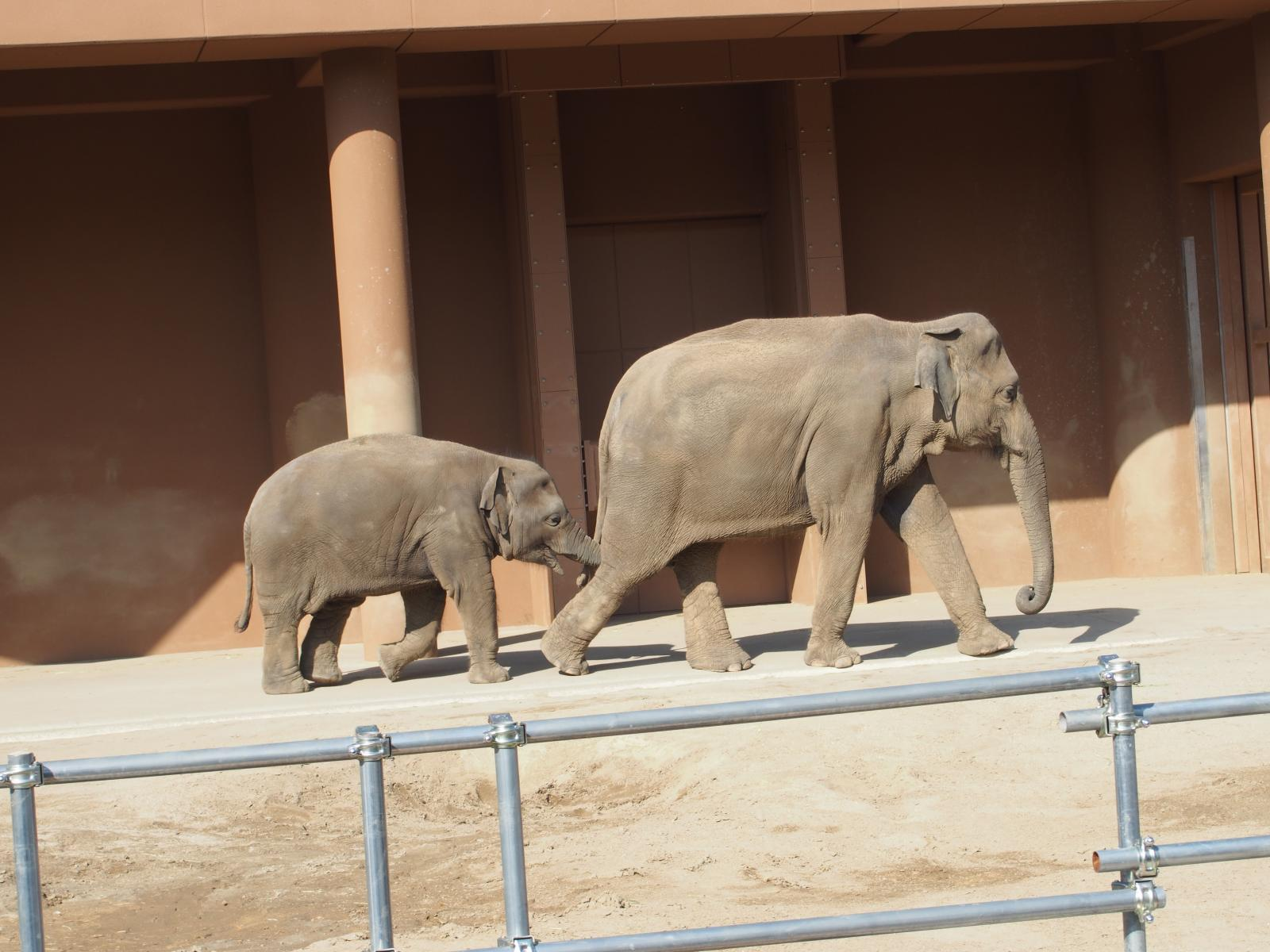 象のおやこ2