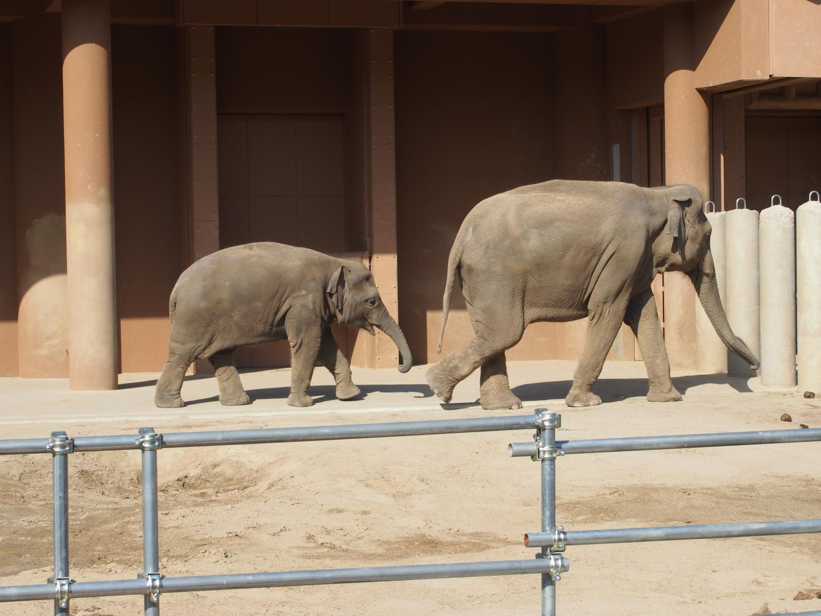 象のおやこ3