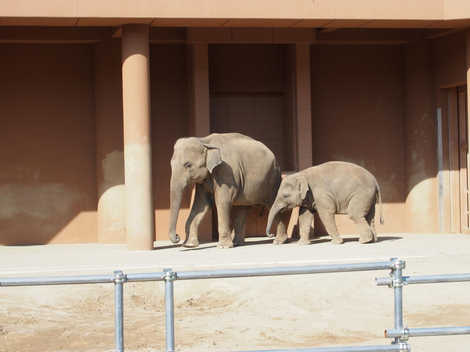 象のおやこ4