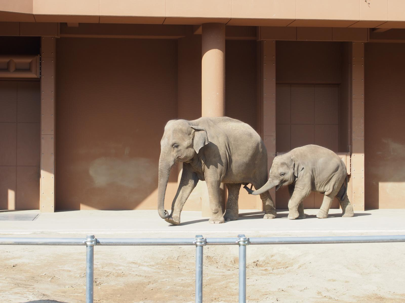 象のおやこ5