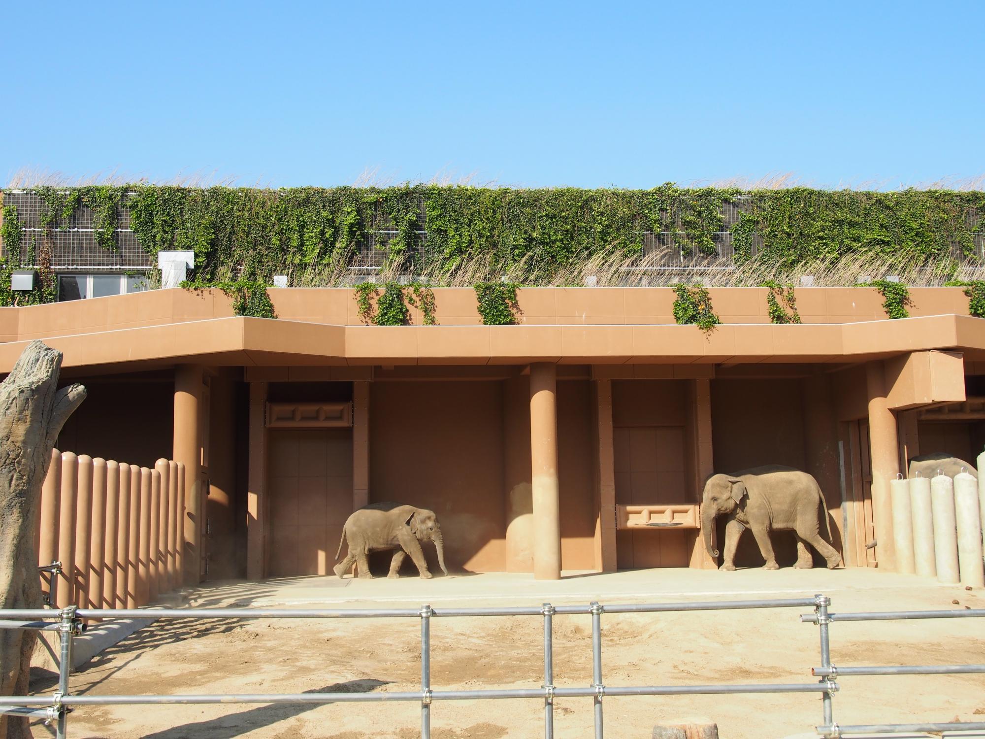 象のおやこ出会う