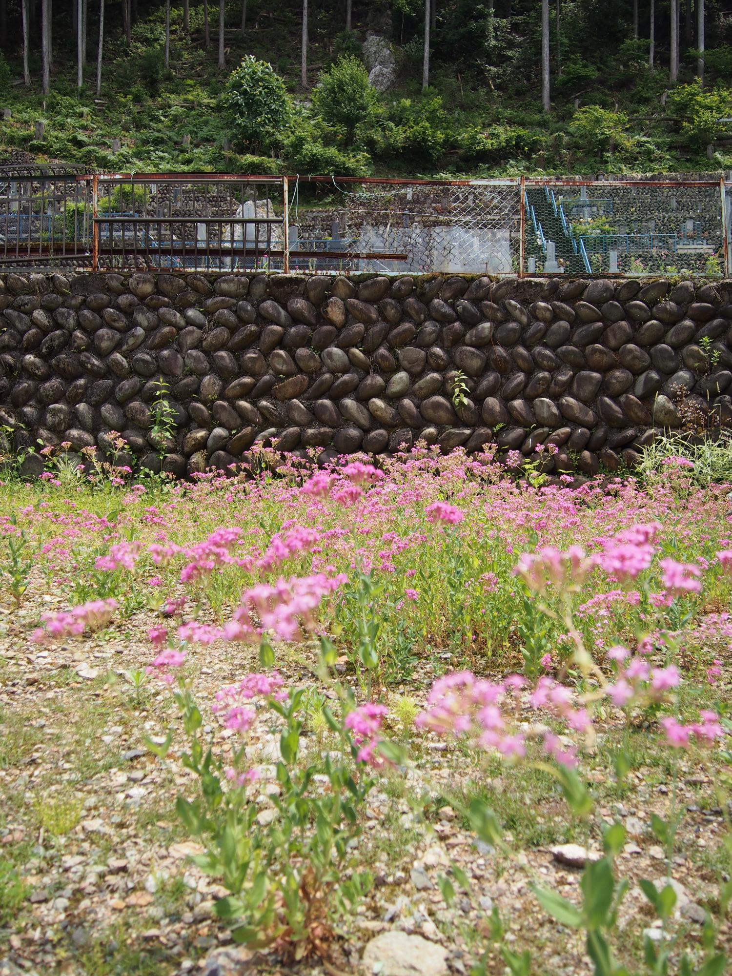 ピンクの花、国道と山