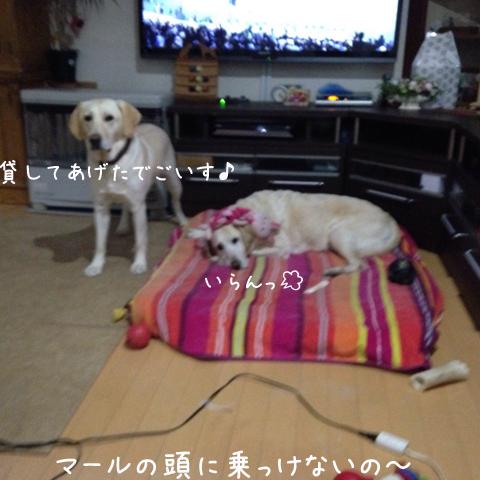 bed11_20150414020355aec.jpg