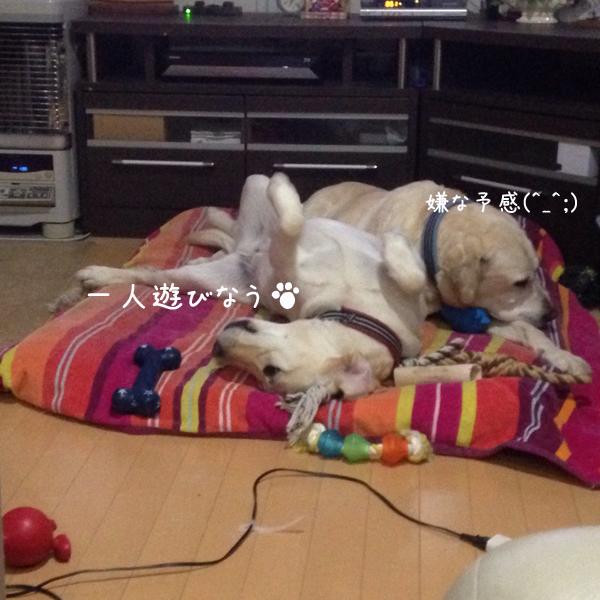 bed_2015041402035283f.jpg