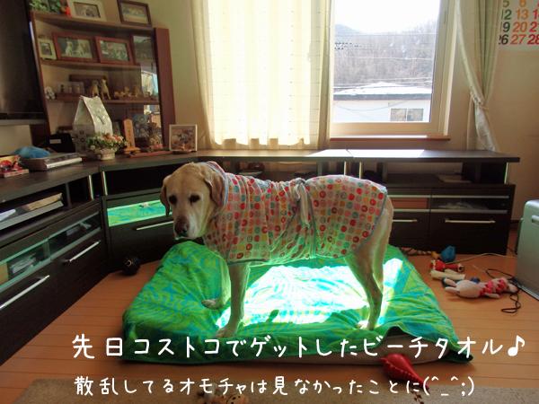 bed_20150414203024bc2.jpg