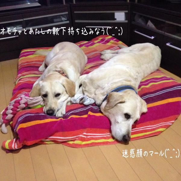 bed_2015050720334781e.jpg