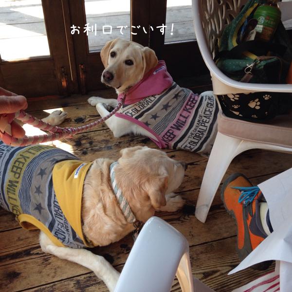 cafe2_201504270831487db.jpg