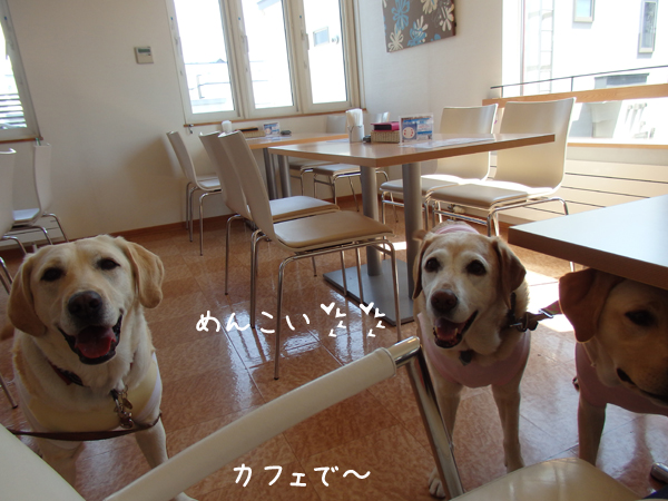 cafe_20150518215602664.jpg