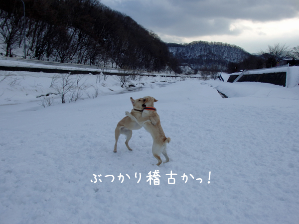 eriakisumou.jpg