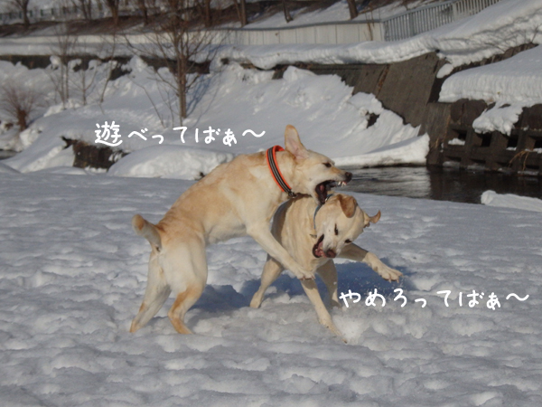 erimaru3_20150220213929d1c.jpg