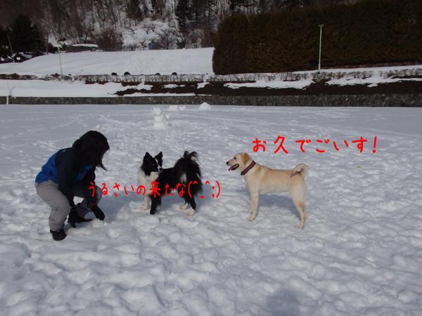 erityobi_20150316211616a59.jpg