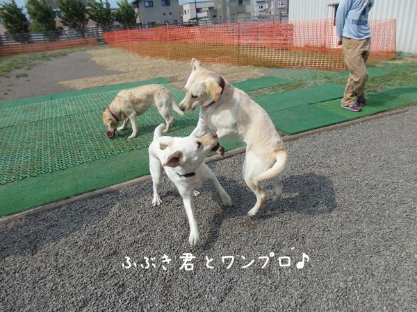 fubuki2.jpg