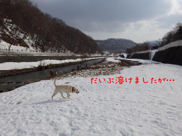 hiroba_20150316212307f35.jpg
