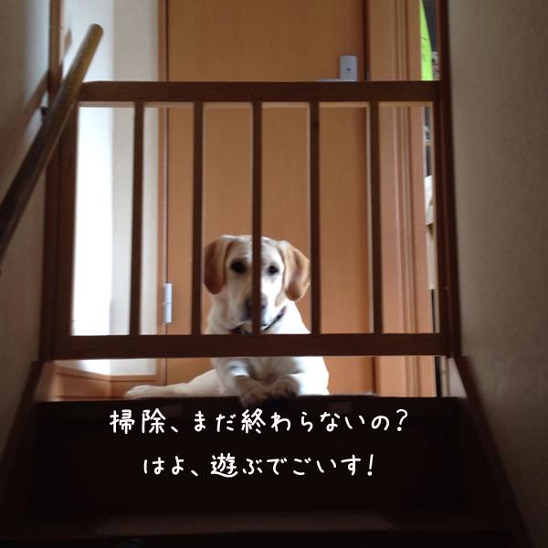 kaidan_20150313235228262.jpg
