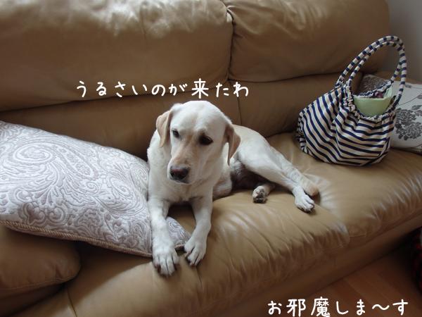 karen_201505132104392ed.jpg