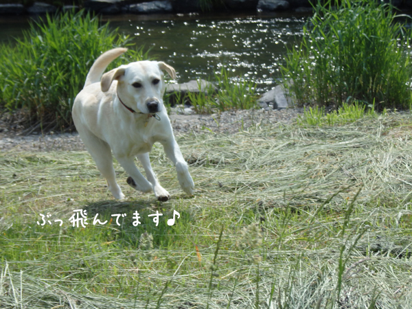 kasen2_20150616203843d72.jpg