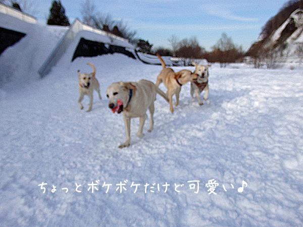 maruhasiru_201502051720496f6.jpg