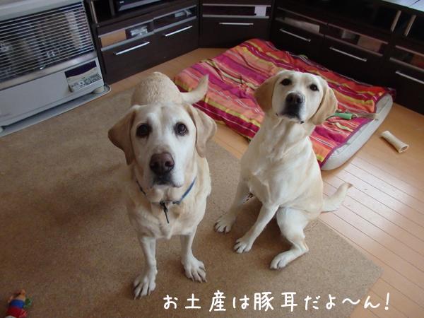 omiyage_2015021115332179b.jpg