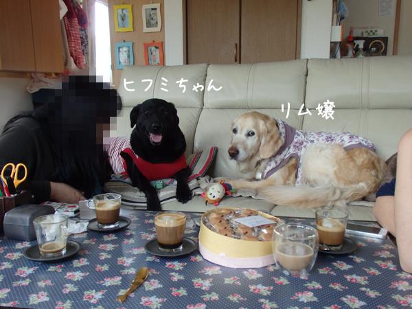 sofa_201505091840272c4.jpg