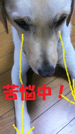 2015061019530000 - コピー