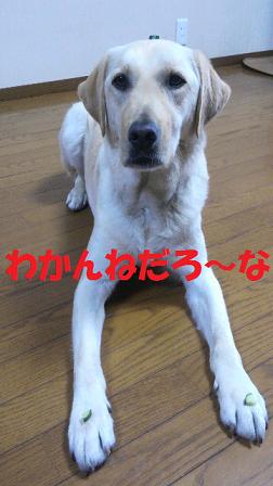 2015061019540000 - コピー (2)