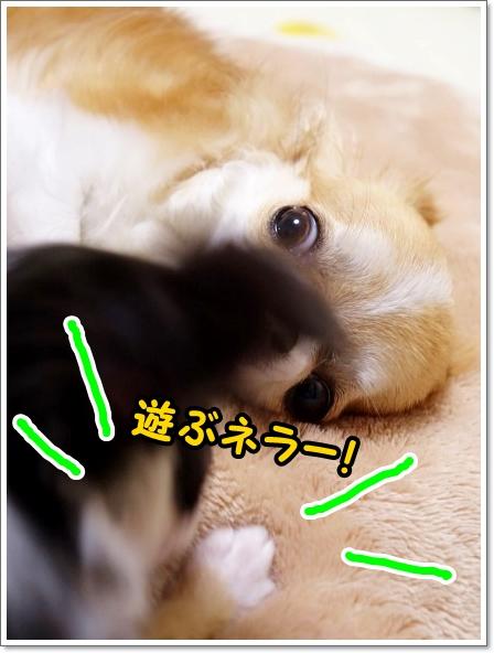 DSC09177_20150606165256ae1.jpg