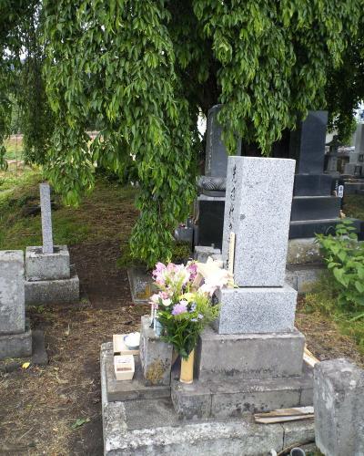 古代桜とお墓(27.6.5)