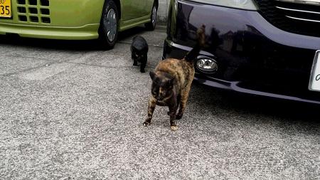駐車場の猫たち
