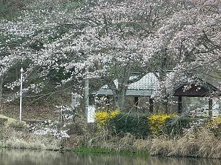 20150403 須田が池 (2)
