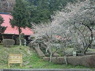 20150403 安善寺 (6)