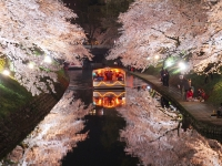 富山市松川べりの桜並木