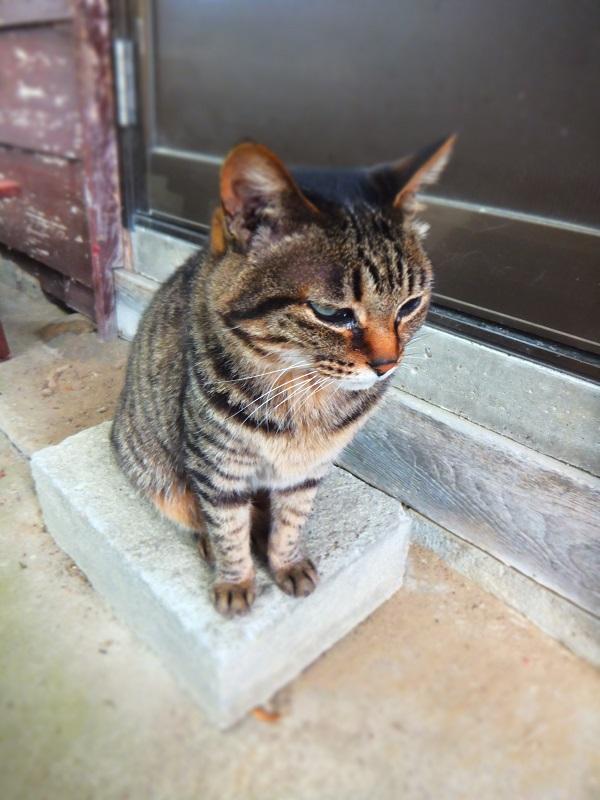 新発田巡り 猫