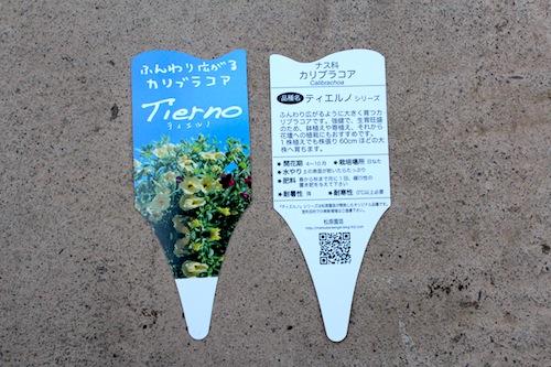 カリブラコア ティエルノ マジェンタアイ  Calibrachoa 育種 生産 販売 松原園芸 オリジナル品種 直売