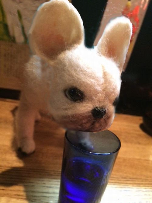 日本酒nomu