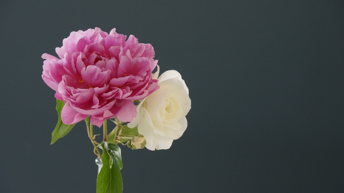 SEL1670Z flower