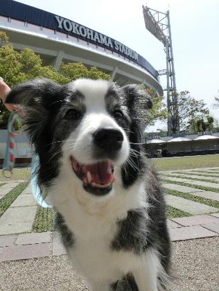 150418横浜公園3