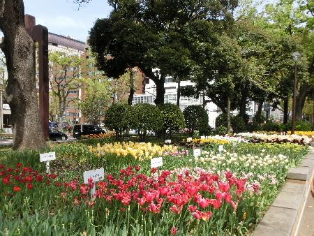 150418横浜公園4