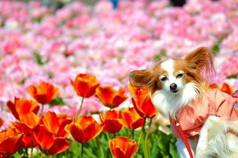 春の遠足 2015.4.16 11