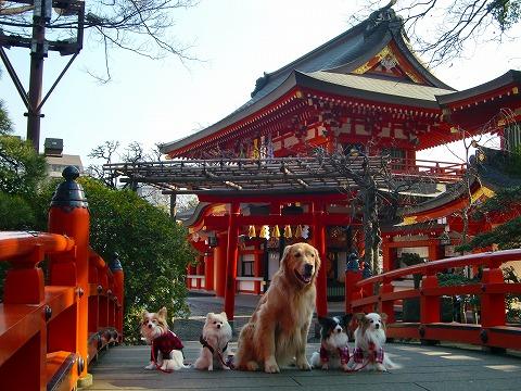 千葉神社 15.1.26