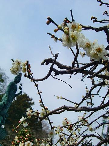 ゴーちゃんのお墓参り 15.3.19