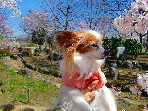 桜ツーショット*